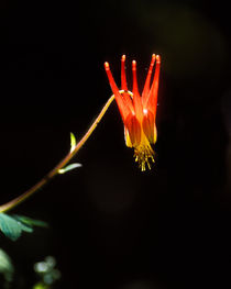 Columbine, Taos, New Mexico by Steven Ralser