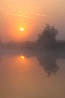 Nebelsonne und Baum von Bernhard Kaiser