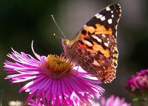 Schmetterlinge6 von Regina Raaf