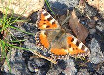 Schmetterlinge7 by Regina Raaf