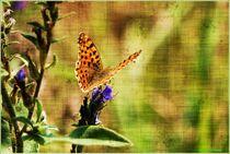 Fine Art Butterfly von Sandra  Vollmann