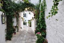 beautiful view of scenic narrow alley with plants, Ostuni, Apulia, Italy von tanialerro