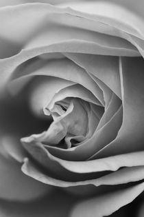 Rose cut black and white von er