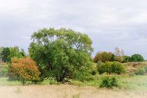 Östergötlands Landscape by Thomas Matzl