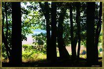 Aus dem Walde  von Sandra  Vollmann
