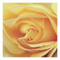 Rose 1 x 1 von er