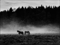 Horses at dawn by Hasse Linden