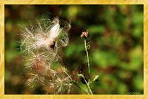 Natur Details Herbst von Sandra  Vollmann