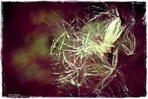 Abstrakt Nature 2  von Sandra  Vollmann