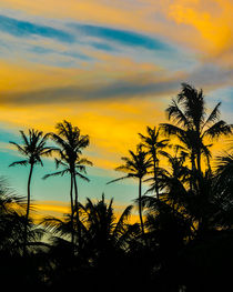 Tropical Scene at Sunset Time by Daniel Ferreira Leites Ciccarino
