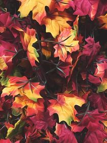 maple leaves texture background in autumn season by timla