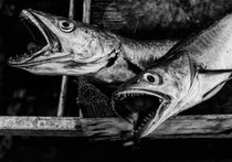 Fish II by Hasse Linden