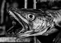 Fish III by Hasse Linden