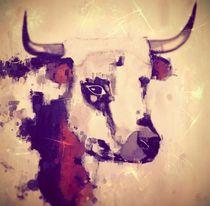 Stier von suzanabocina
