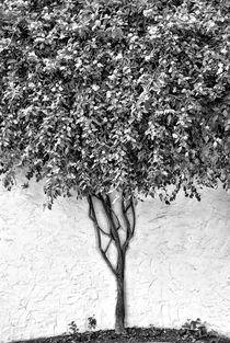 Tree von kiwar
