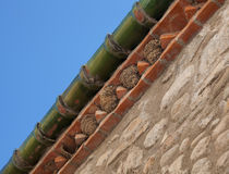 House Martin nests by Leighton Collins