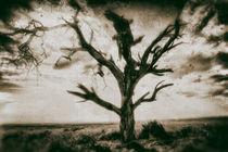 Baum in der Savane von Viktor Peschel