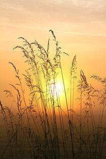 'Gräser im Nebel' von Bernhard Kaiser