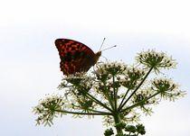 Schmetterlinge_26 by Regina Raaf