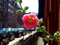 Stadtblume von Zarahzeta ®