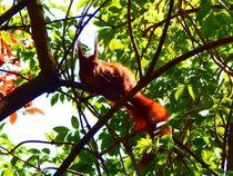 curious squirrel von Zarahzeta ®