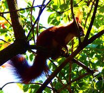 squirrel punk von Zarahzeta ®