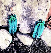 green cactus on the ground with stone background by timla