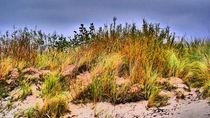 Colors of the grass von Heike Burmester