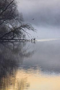 Kormorane und andere Wasservögel by Bernhard Kaiser