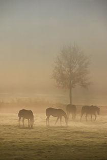 Pferde im Nebel by Bernhard Kaiser
