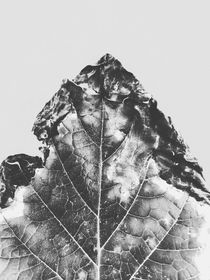 leaf texture background in black and white by timla