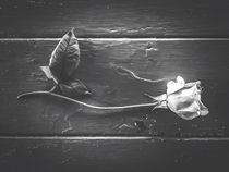 rose with leaves on the wood table in black and white von timla