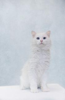 Snowy / 2 von Heidi Bollich