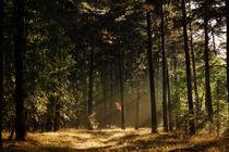 Herbstwanderung by ir-md