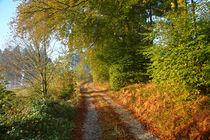 'Herbstimpression' von Bernhard Kaiser