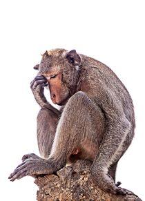 Der Affe denkt nach von mroppx