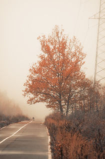 Autumn Road von cinema4design