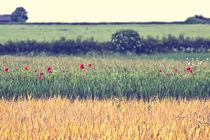 Country Lines von Vicki Field