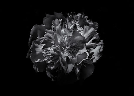 Backyard-flowers-in-black-and-white-25-5x7