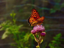Butterfly & Clover by Richard H. Jones