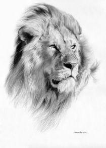 Lion by Fernando Ferreiro