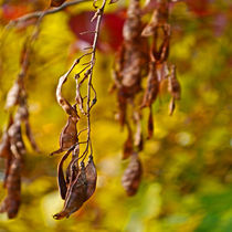 autumn leafs by Michael Naegele
