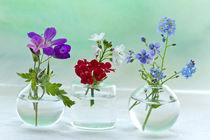 Wiesenblumen by lightart