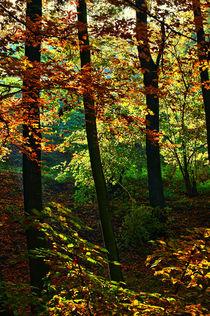 goldener Herbst by Kurt Wilhelm