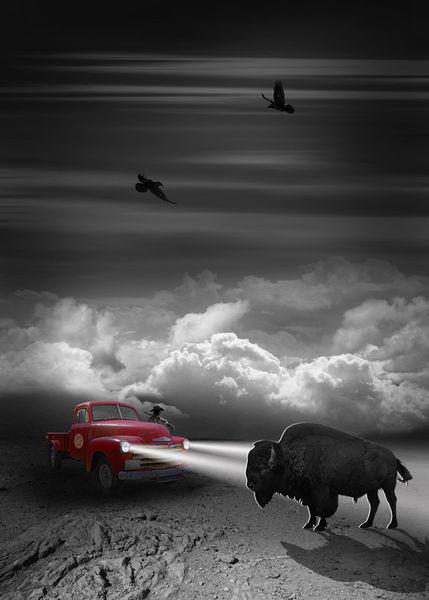 Unwetter-bison