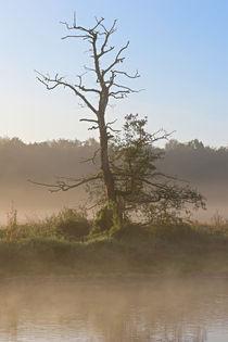 Der tote Baum am Flussufer von Bernhard Kaiser