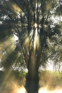 Ein Baum am Flussufer von Bernhard Kaiser