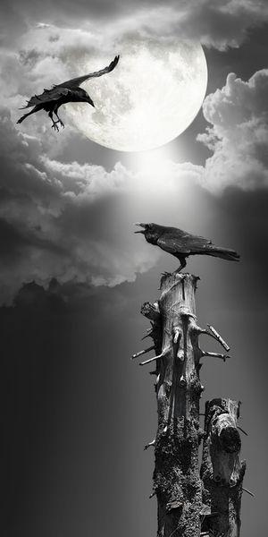 Raven-neu