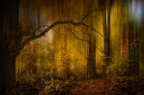 Tor im Wald von Stefan Kierek