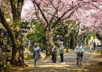Cherry blossom in Yanaka park von Erik Mugira